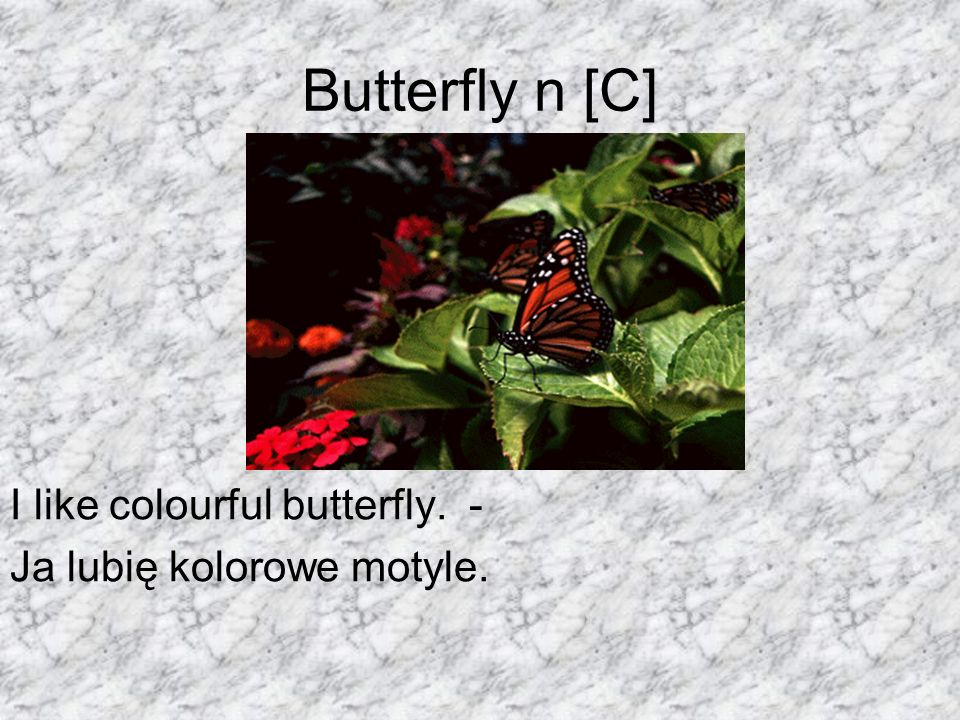Butterfly n [C] I like colourful butterfly. -